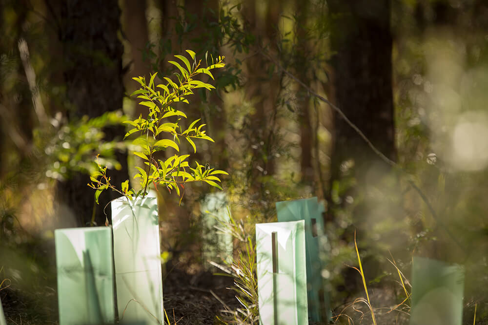 GEOmasta tree guards hardwood tree stakes