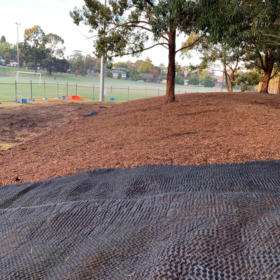 Seed mat at Dundas Park